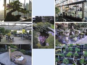 La clinica dei bonsai uncicinindemilan - Cura dei bonsai in casa ...